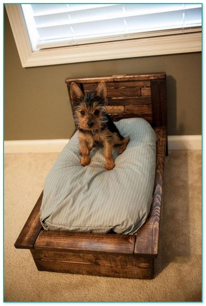 Amazing Medium Sized Dog Beds