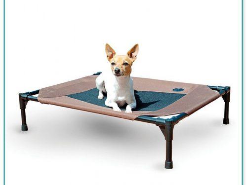 Great Medium Sized Raised Dog Beds