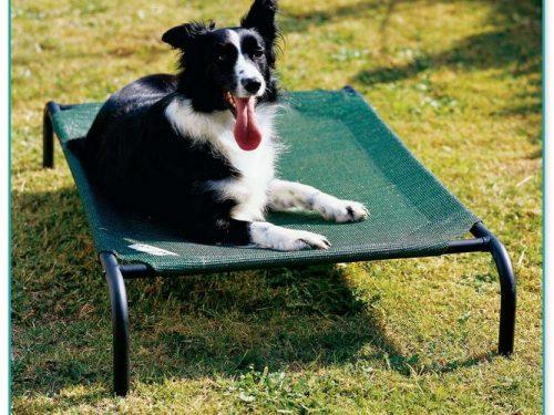 Medium Sized Raised Dog Beds